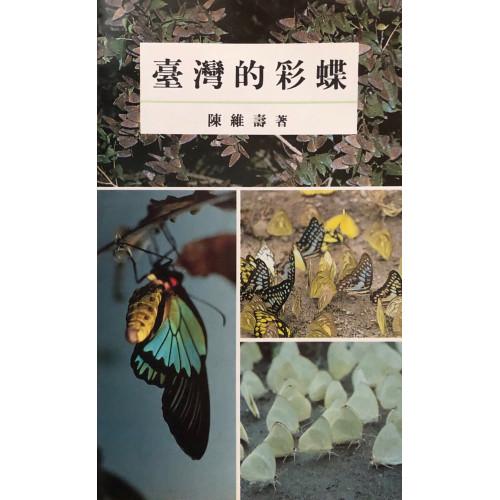 台灣的彩蝶
